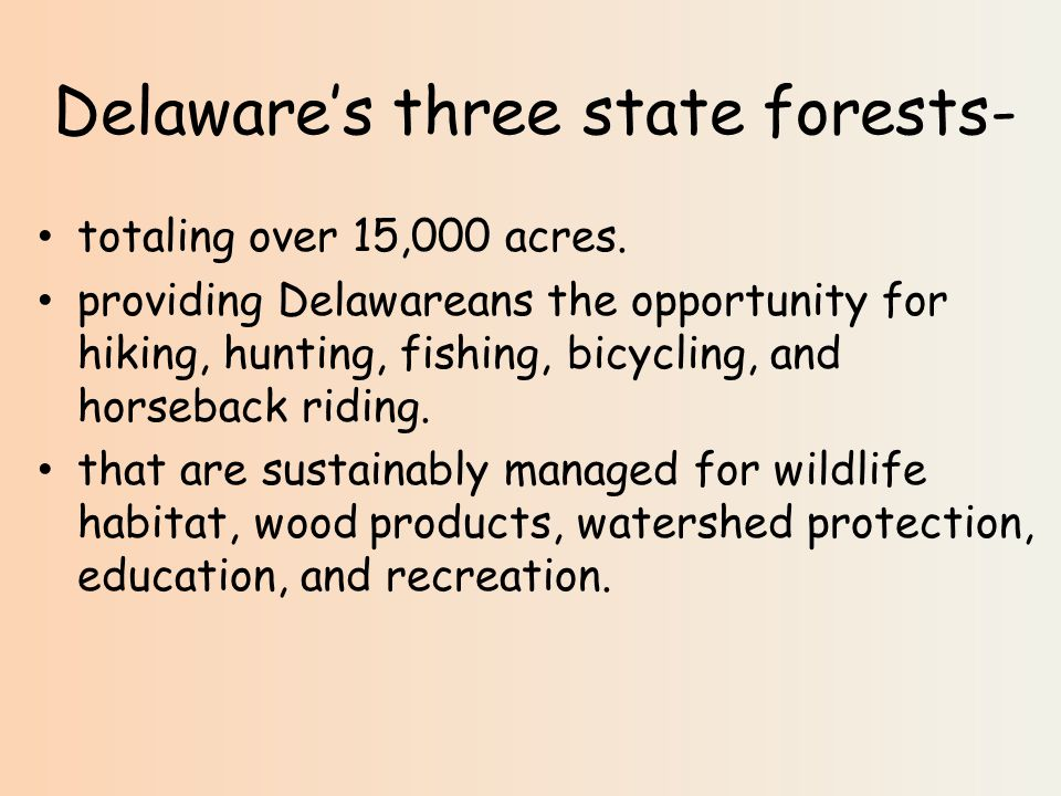 Delaware's three state forests- totaling over 15,000 acres.