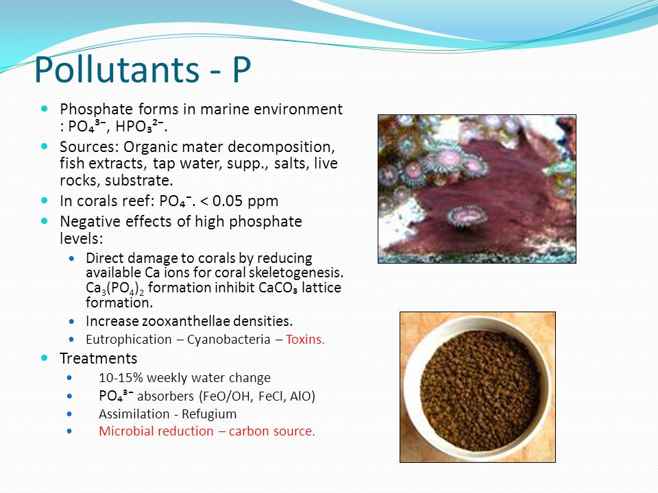 Phosphate forms in marine environment : PO₄³⁻, HPO₃²⁻. Sources: Organic mater decomposition, fish extracts, tap water, supp., salts, live rocks, subst