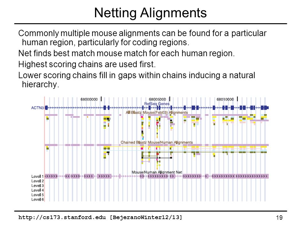 http://cs173.stanford.edu [BejeranoWinter12/13] 19 Netting Alignments Commonly multiple mouse alignments can be found for a particular human region, particularly for coding regions.