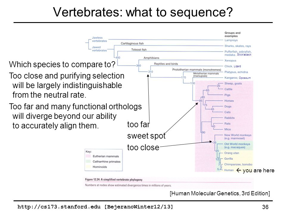 http://cs173.stanford.edu [BejeranoWinter12/13] 36 Vertebrates: what to sequence.
