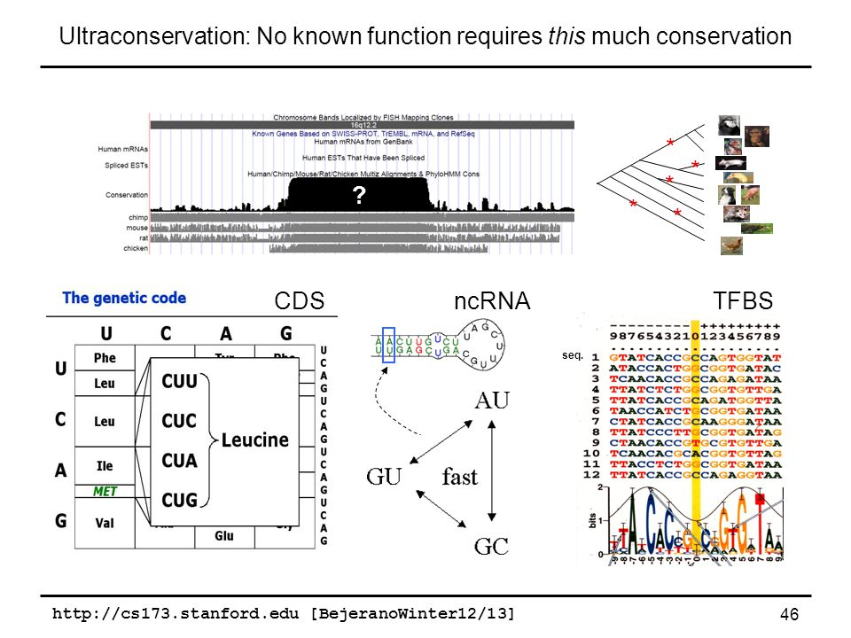 http://cs173.stanford.edu [BejeranoWinter12/13] 46 Ultraconservation: No known function requires this much conservation CDSncRNATFBS * * * * * seq.
