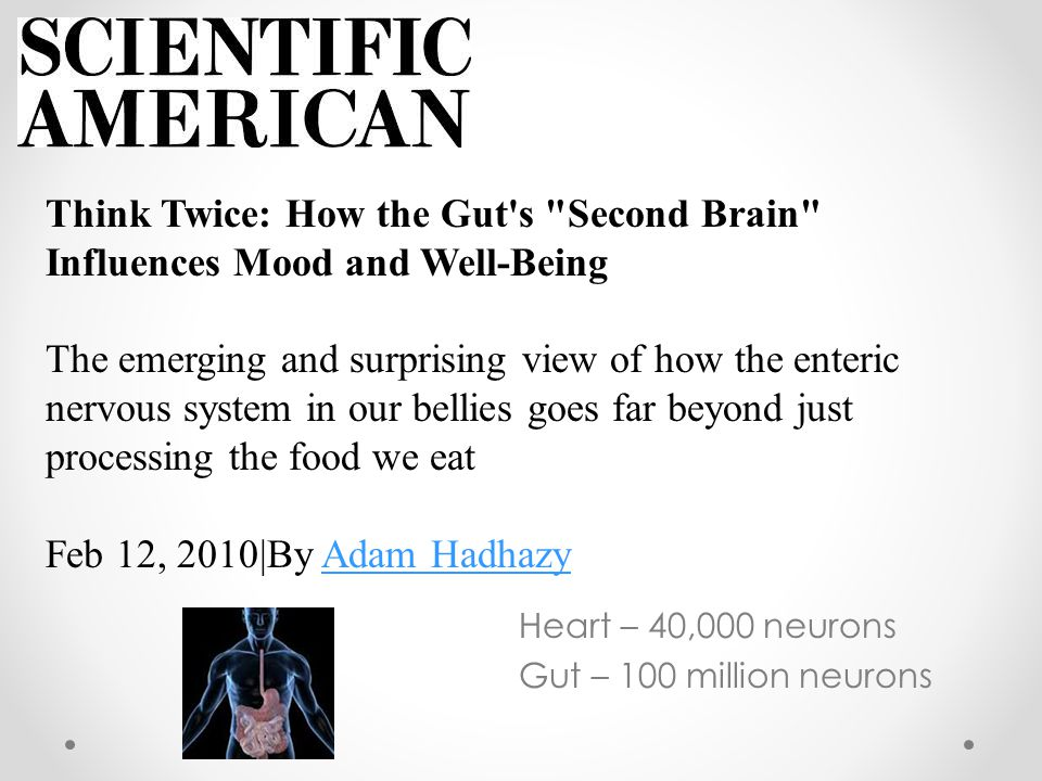 Heart – 40,000 neurons Gut – 100 million neurons Think Twice: How the Gut s Second Brain Influences Mood and Well-Being The emerging and surprising view of how the enteric nervous system in our bellies goes far beyond just processing the food we eat Feb 12, 2010|By Adam HadhazyAdam Hadhazy