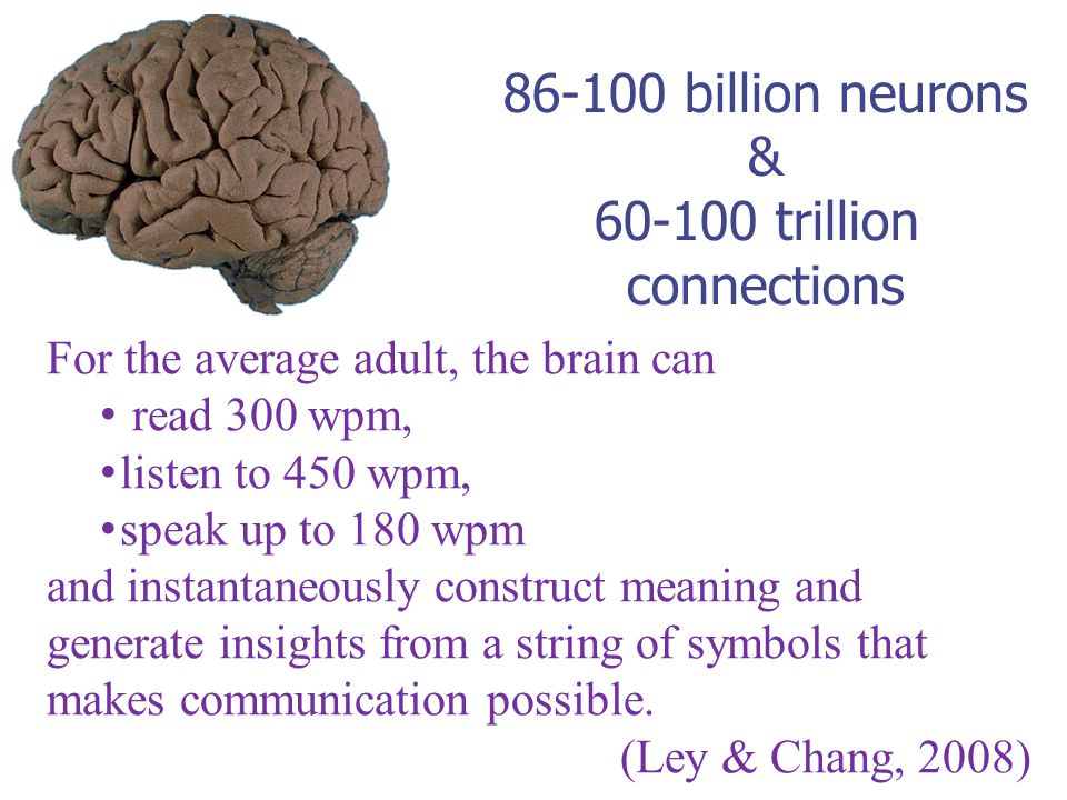 86-100 billion neurons & 60-100 trillion connections For the average adult, the brain can read 300 wpm, listen to 450 wpm, speak up to 180 wpm and instantaneously construct meaning and generate insights from a string of symbols that makes communication possible.
