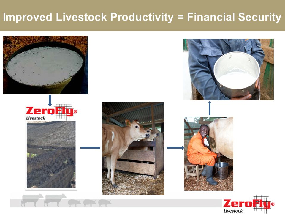 Improved Livestock Productivity = Financial Security