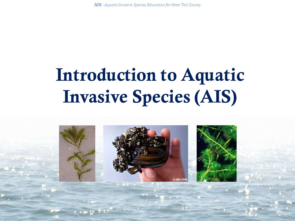 Introduction to Aquatic Invasive Species (AIS) AIS · Aquatic Invasive Species Education for Otter Tail County