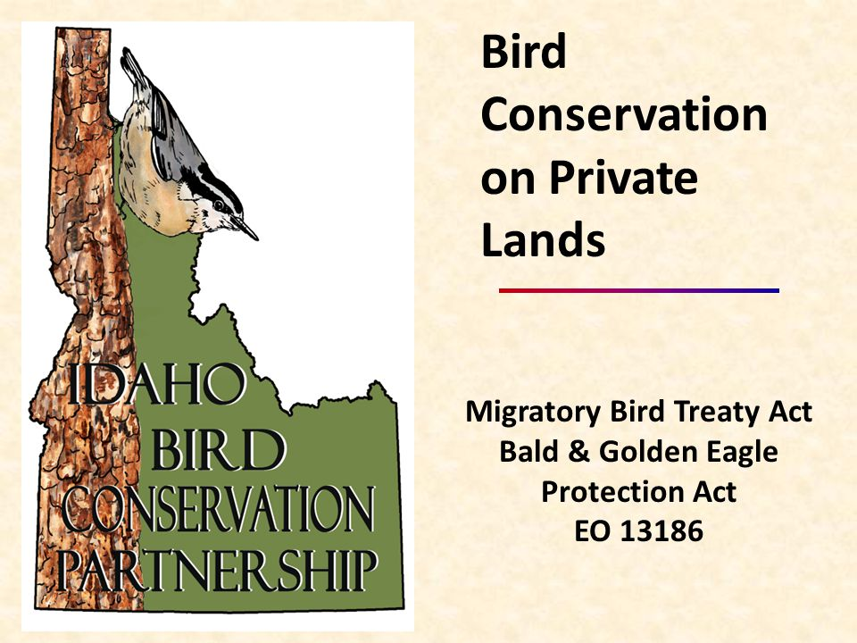 Migratory Bird Treaty Act Bald & Golden Eagle Protection Act EO 13186 Bird Conservation on Private Lands