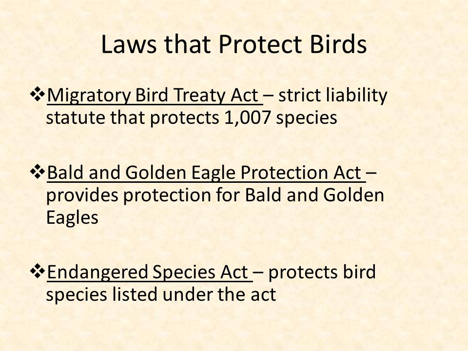 Migratory Bird Treaty Act of 1918 …it is unlawful to pursue, hunt, take, capture or kill…any migratory bird, part, nest, egg… (16 U.S.C.