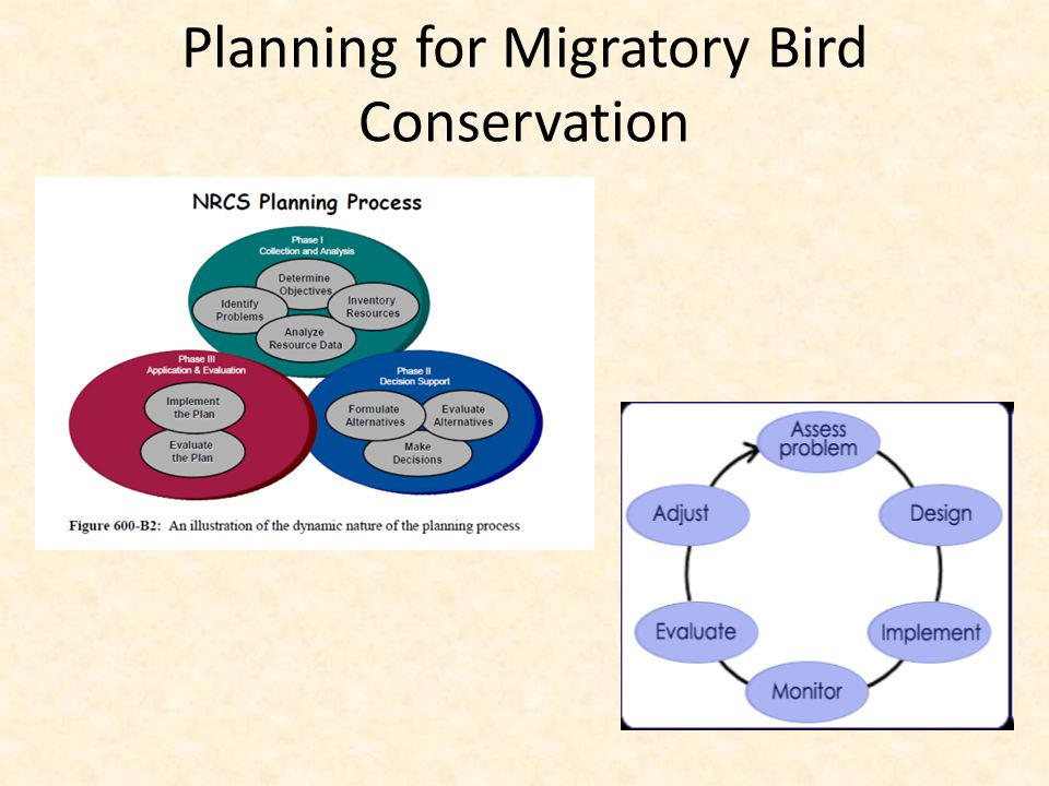 Planning for Migratory Bird Conservation