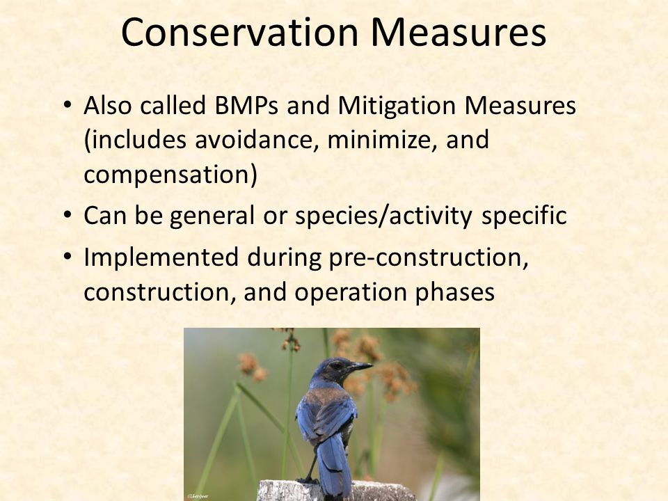 Conservation Measures Also called BMPs and Mitigation Measures (includes avoidance, minimize, and compensation) Can be general or species/activity specific Implemented during pre-construction, construction, and operation phases