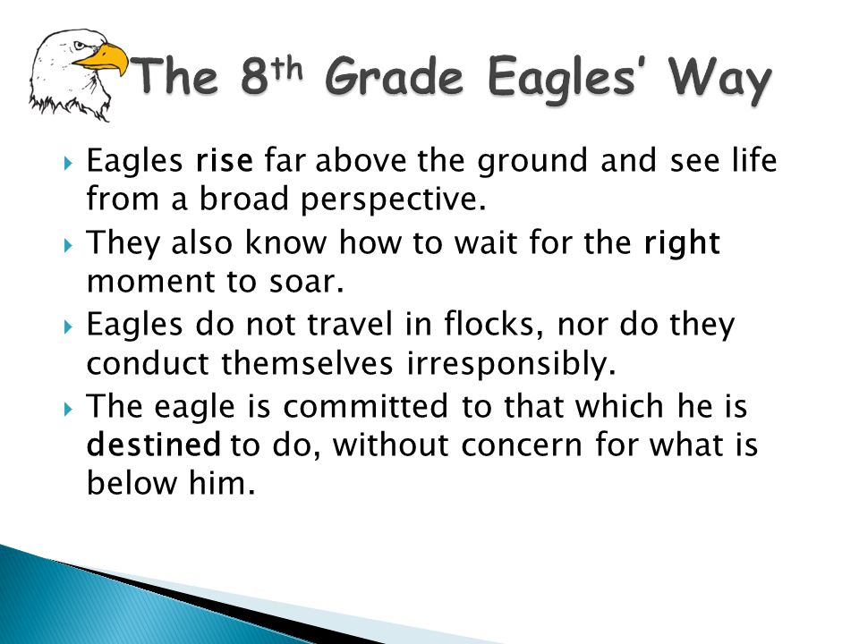  Eagles rise far above the ground and see life from a broad perspective.