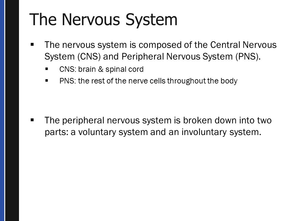 The Nervous System  The nervous system is composed of the Central Nervous System (CNS) and Peripheral Nervous System (PNS).
