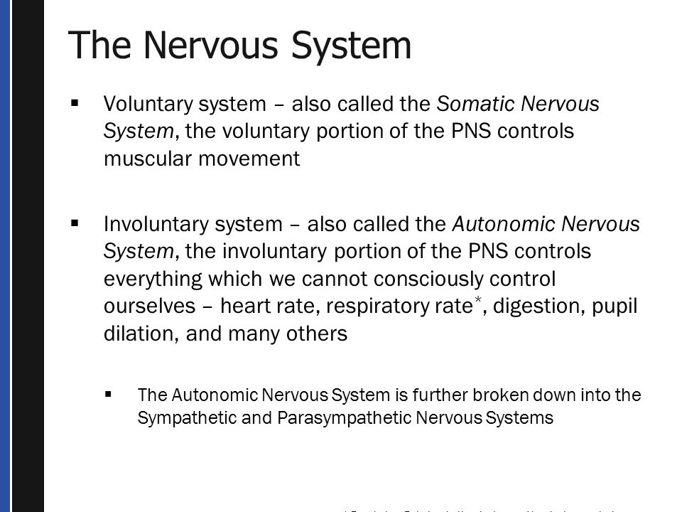 The Nervous System  Voluntary system – also called the Somatic Nervous System, the voluntary portion of the PNS controls muscular movement  Involuntary system – also called the Autonomic Nervous System, the involuntary portion of the PNS controls everything which we cannot consciously control ourselves – heart rate, respiratory rate *, digestion, pupil dilation, and many others  The Autonomic Nervous System is further broken down into the Sympathetic and Parasympathetic Nervous Systems * Respiratory Rate has both voluntary and involuntary controls