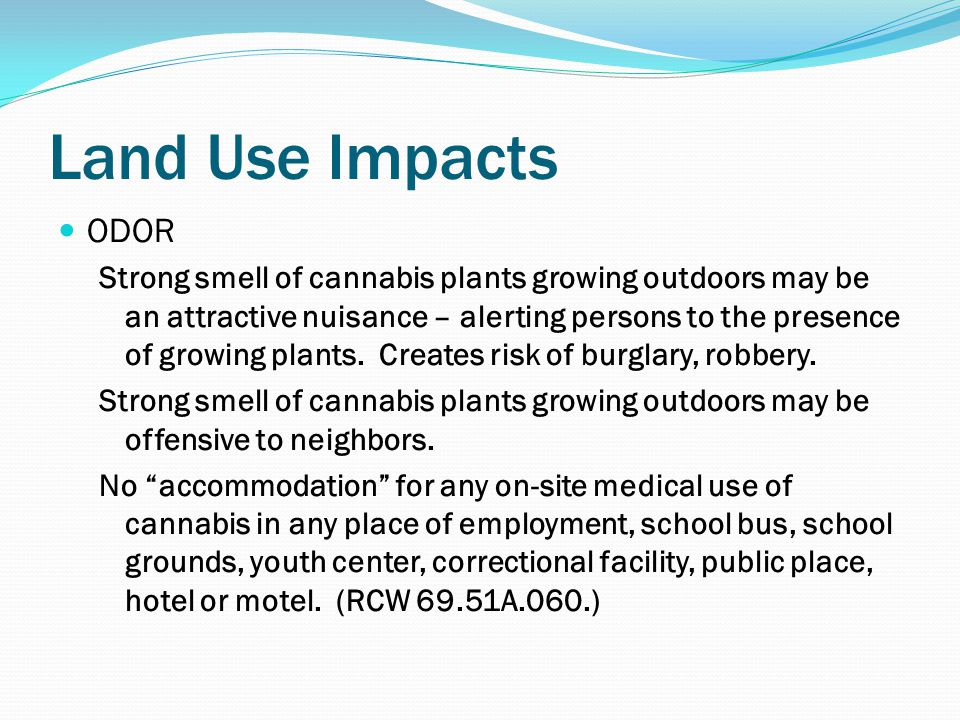Land Use Impacts ODOR Strong smell of cannabis plants growing outdoors may be an attractive nuisance – alerting persons to the presence of growing plants.