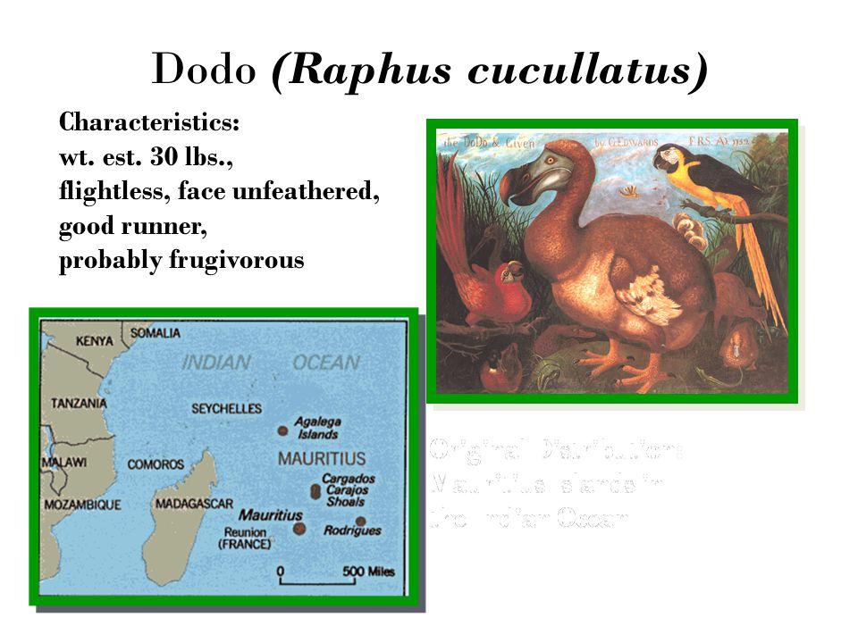 Dodo (Raphus cucullatus) Characteristics: wt.est.