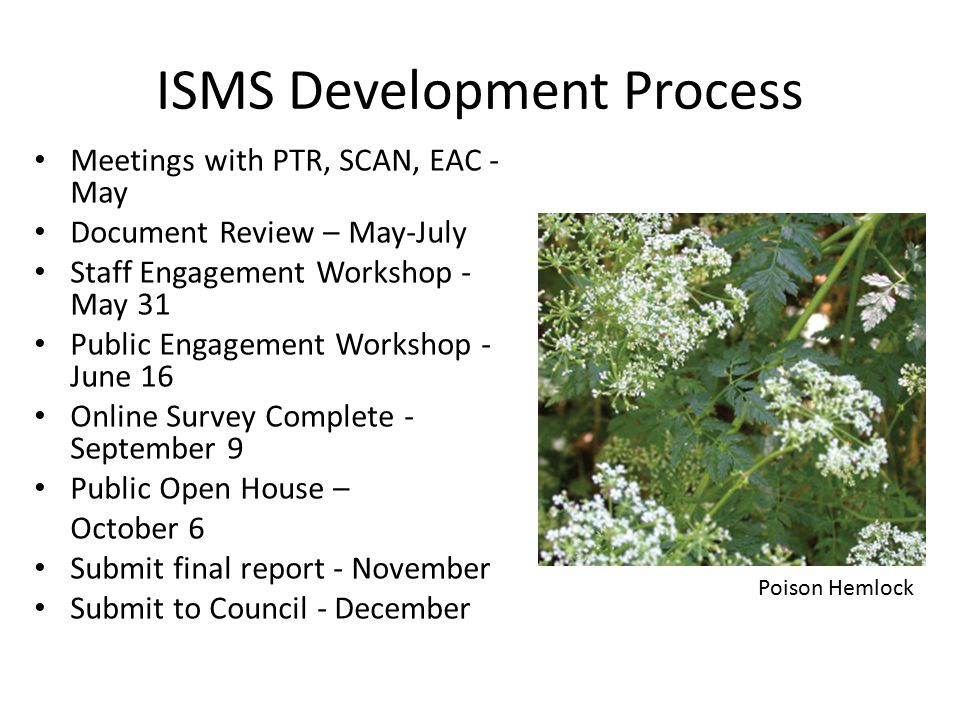 Key Findings Proactive, long-term strategy, integrated regional approach Early detection and rapid response Identify priority sites Prevent the introduction of new invasives Native plants in flats for restoration project