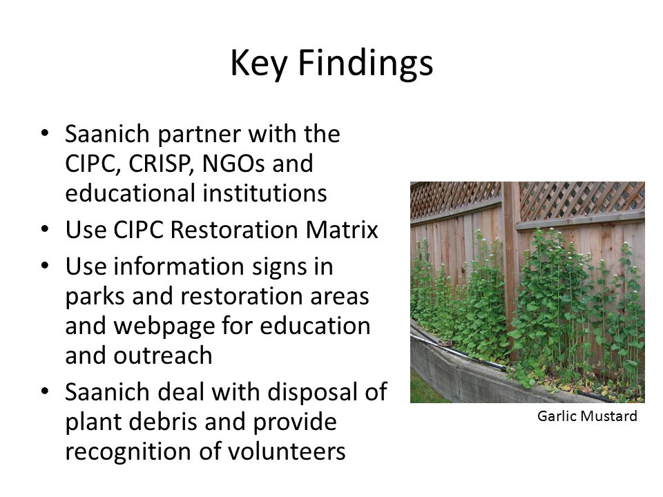 Key Findings Saanich partner with the CIPC, CRISP, NGOs and educational institutions Use CIPC Restoration Matrix Use information signs in parks and restoration areas and webpage for education and outreach Saanich deal with disposal of plant debris and provide recognition of volunteers Garlic Mustard