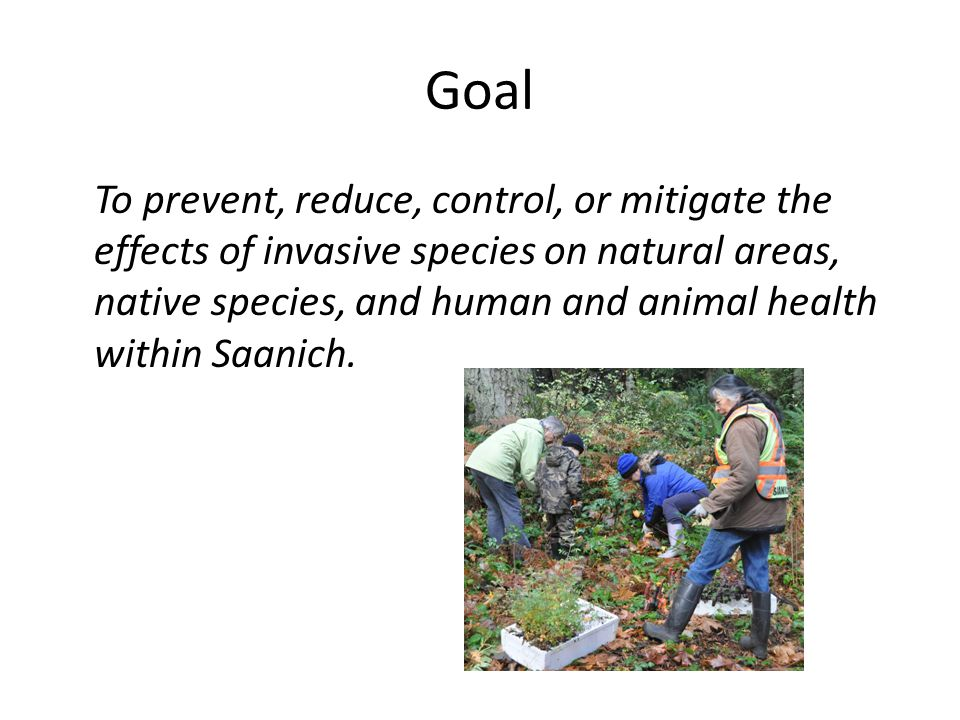 Strategies 1.Develop a comprehensive approach 2.Prevent the introduction of and eradicate new invasive species 3.Contain and control the spread of established invasive species to non infested sites 4.Ensure Program Sustainability