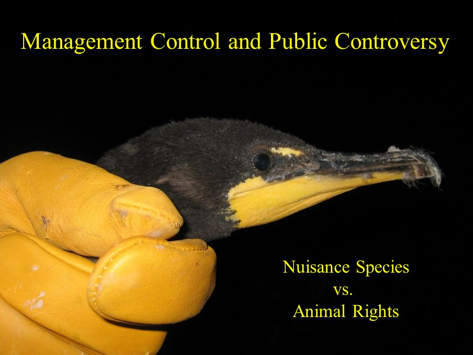 Management Control and Public Controversy Nuisance Species vs. Animal Rights