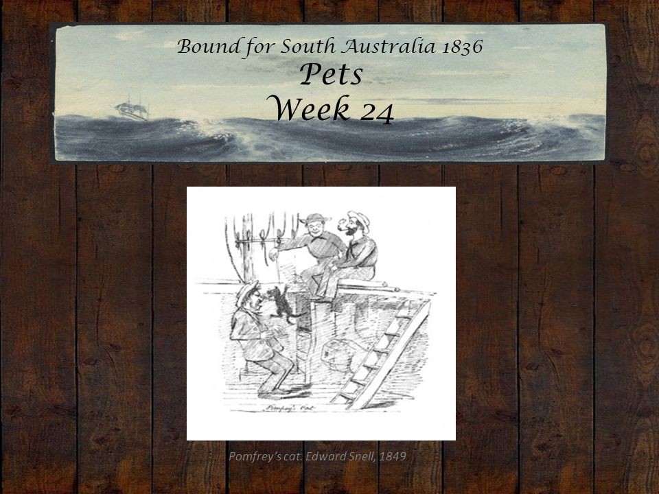 Bound for South Australia 1836 Pets Week 24 Pomfrey's cat. Edward Snell, 1849
