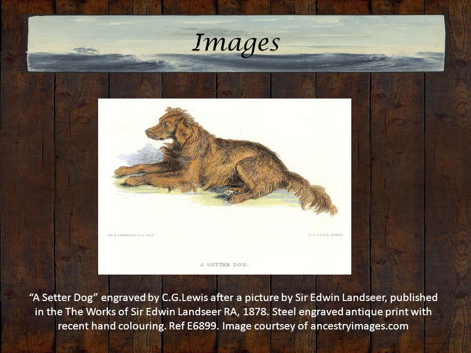 Images A Setter Dog engraved by C.G.Lewis after a picture by Sir Edwin Landseer, published in the The Works of Sir Edwin Landseer RA, 1878.