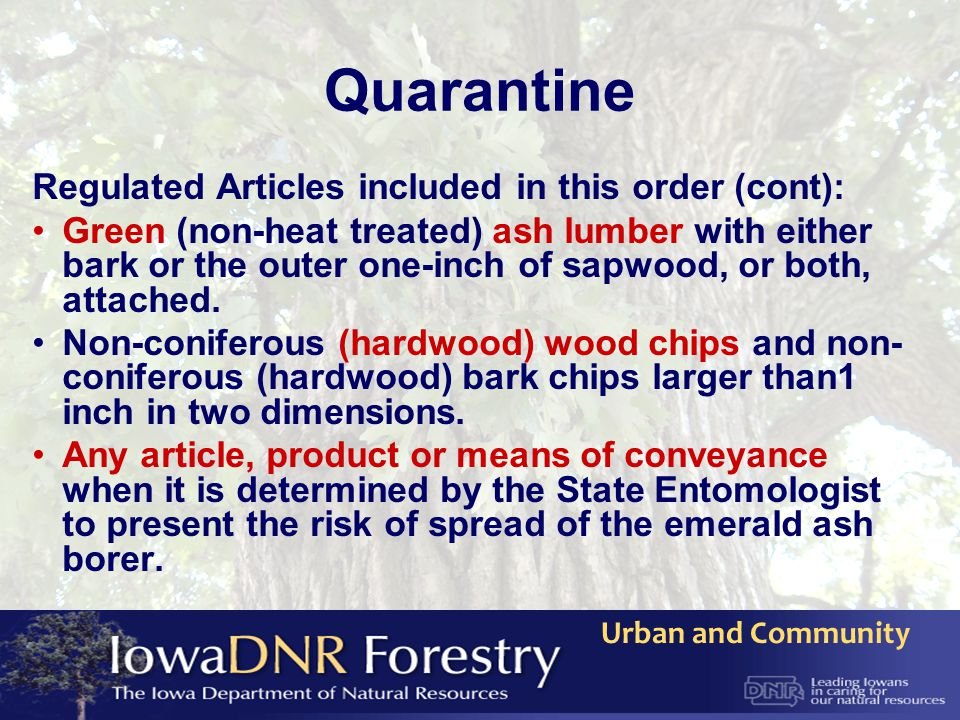 Urban and Community Quarantine Regulated Articles included in this order (cont): Green (non-heat treated) ash lumber with either bark or the outer one