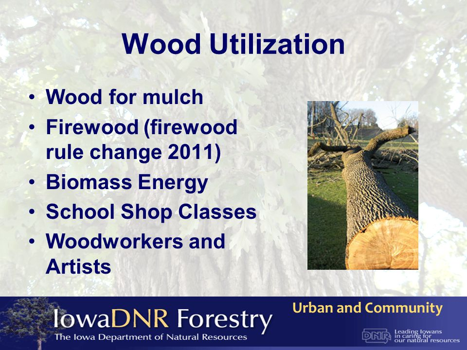 Wood Utilization Wood for mulch Firewood (firewood rule change 2011) Biomass Energy School Shop Classes Woodworkers and Artists