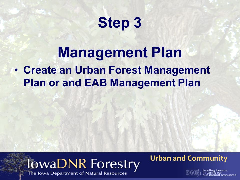 Urban and Community Step 3 Management Plan Create an Urban Forest Management Plan or and EAB Management Plan