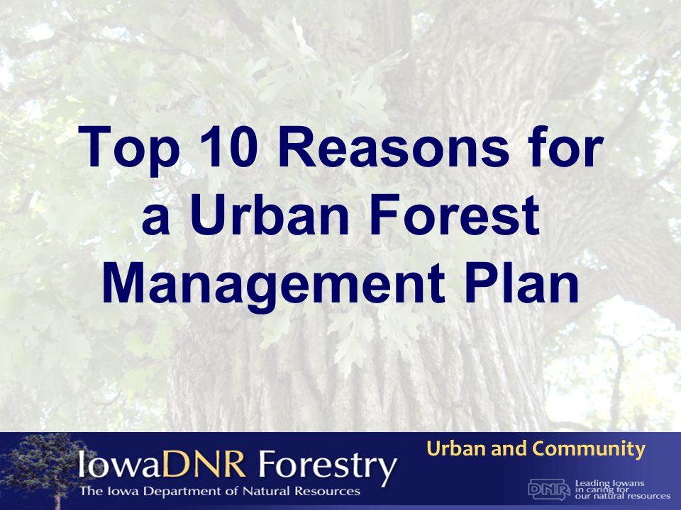 Urban and Community Top 10 Reasons for a Urban Forest Management Plan