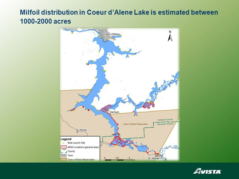 Milfoil distribution in Coeur d'Alene Lake is estimated between 1000-2000 acres