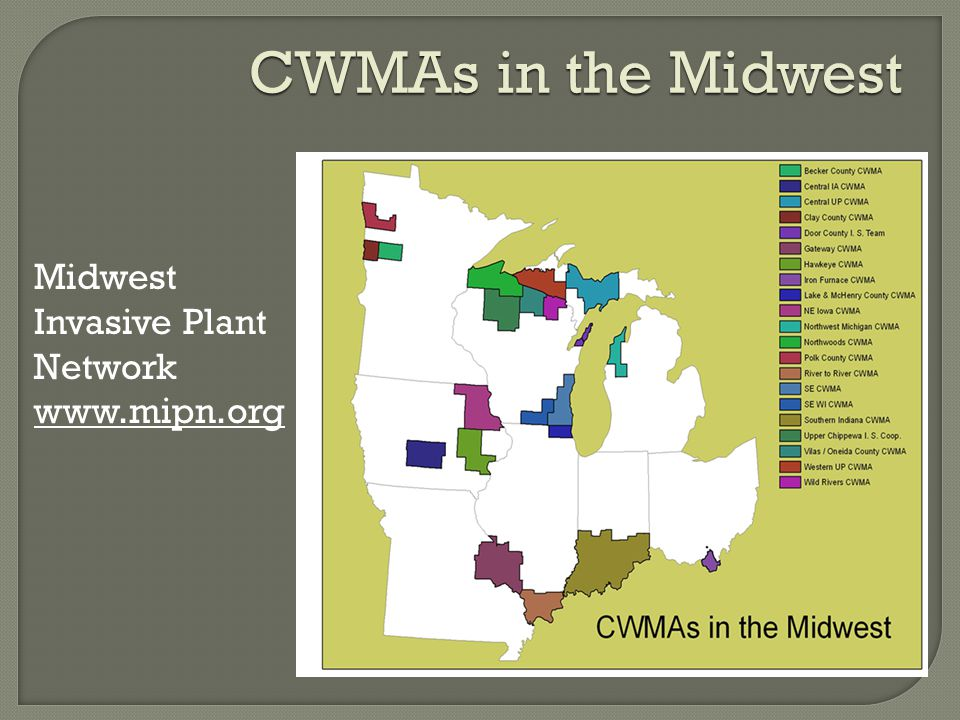 CWMAs in the Midwest Midwest Invasive Plant Network www.mipn.org