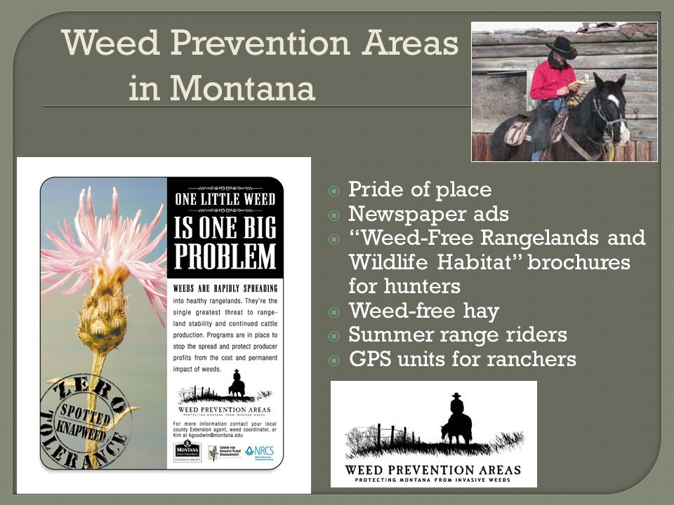  Pride of place  Newspaper ads  Weed-Free Rangelands and Wildlife Habitat brochures for hunters  Weed-free hay  Summer range riders  GPS units for ranchers Weed Prevention Areas in Montana