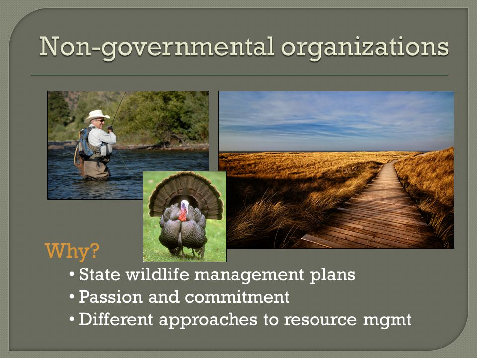 Why State wildlife management plans Passion and commitment Different approaches to resource mgmt