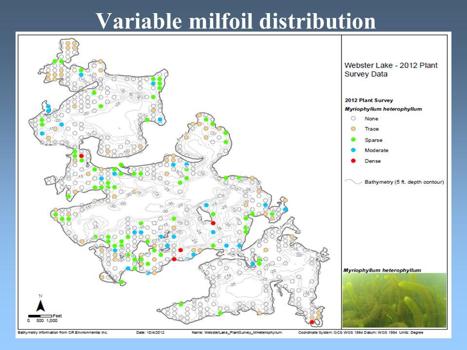 Variable milfoil distribution