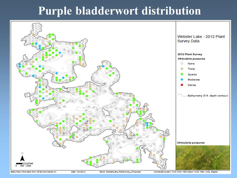 Purple bladderwort distribution