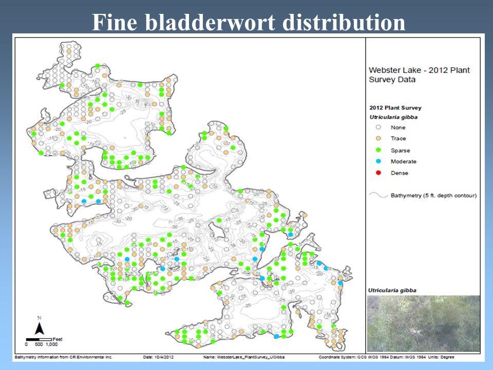 Fine bladderwort distribution