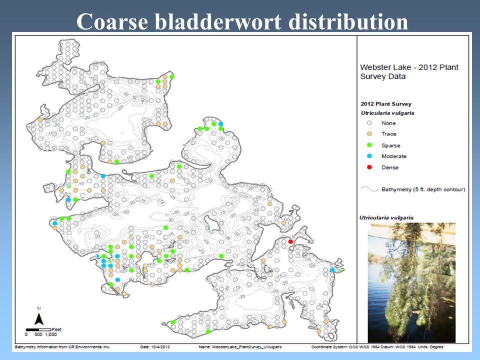 Coarse bladderwort distribution