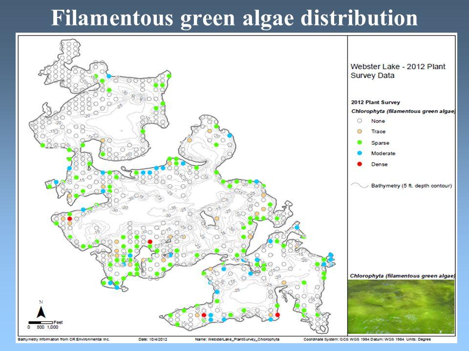 Filamentous green algae distribution