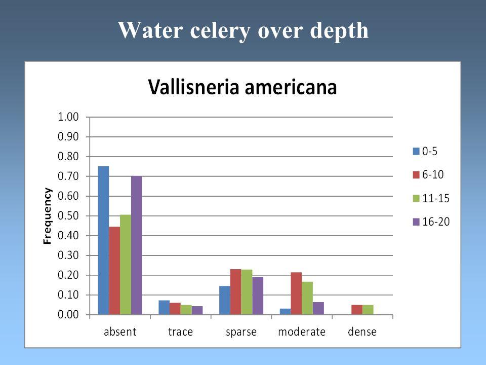 Water celery over depth