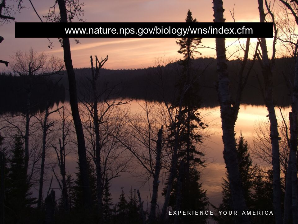 E X P E R I E N C E Y O U R A M E R I C A www.nature.nps.gov/biology/wns/index.cfm