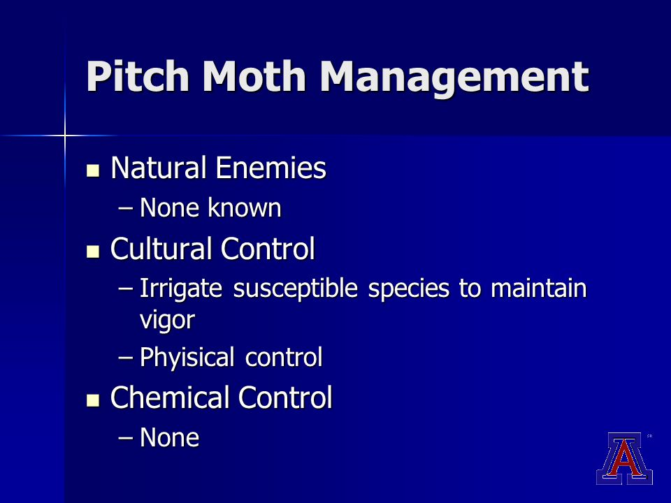 Pitch Moth Management Natural Enemies Natural Enemies –None known Cultural Control Cultural Control –Irrigate susceptible species to maintain vigor –Phyisical control Chemical Control Chemical Control –None