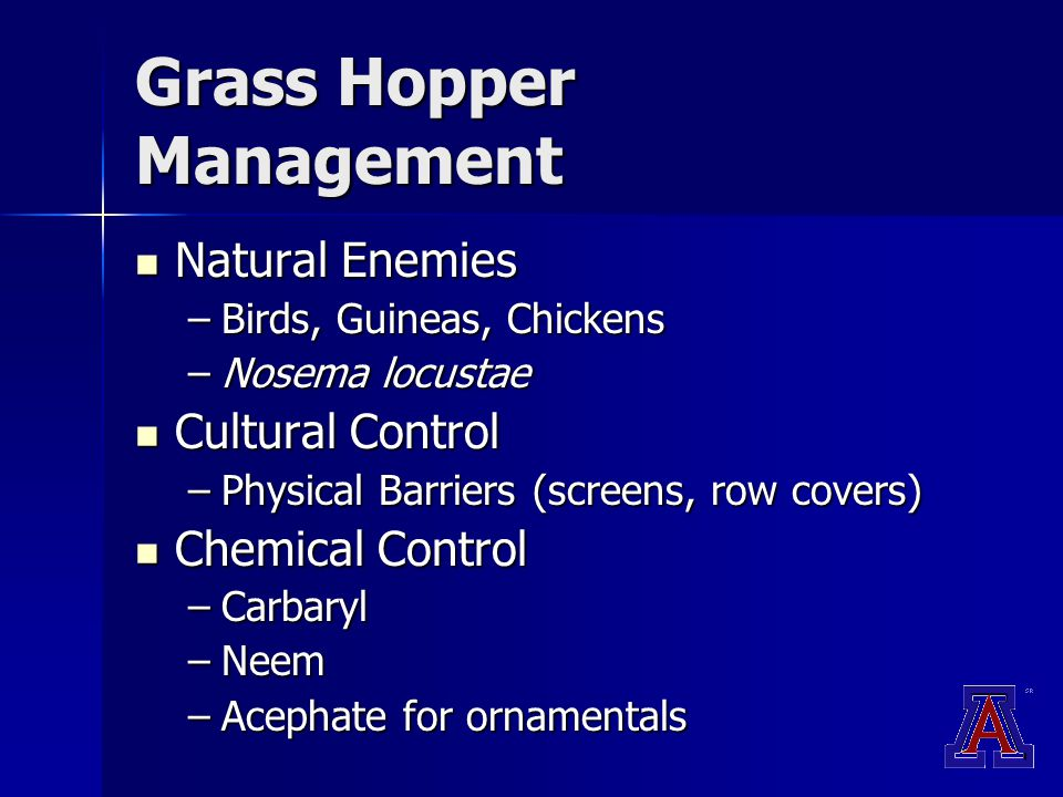 Grass Hopper Management Natural Enemies Natural Enemies –Birds, Guineas, Chickens –Nosema locustae Cultural Control Cultural Control –Physical Barriers (screens, row covers) Chemical Control Chemical Control –Carbaryl –Neem –Acephate for ornamentals
