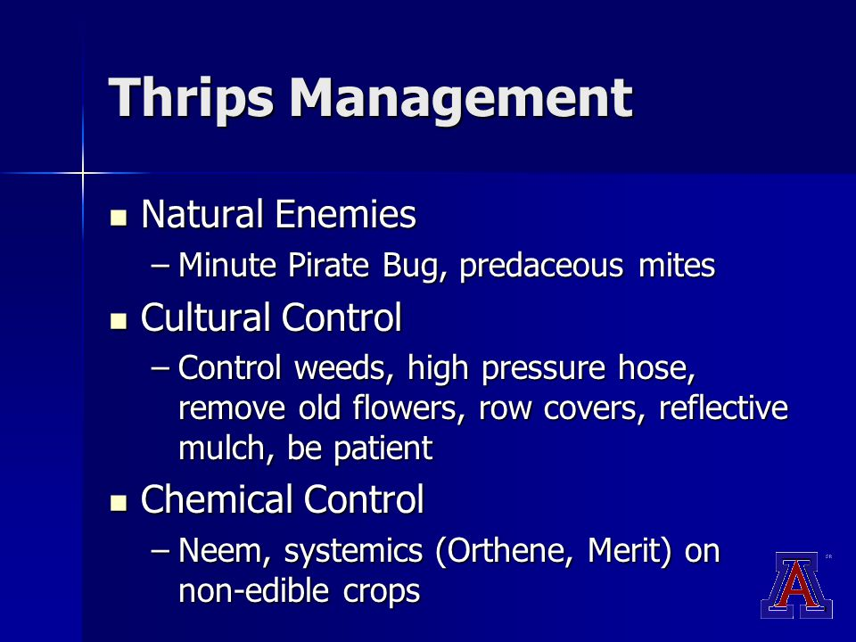 Thrips Management Natural Enemies Natural Enemies –Minute Pirate Bug, predaceous mites Cultural Control Cultural Control –Control weeds, high pressure hose, remove old flowers, row covers, reflective mulch, be patient Chemical Control Chemical Control –Neem, systemics (Orthene, Merit) on non-edible crops