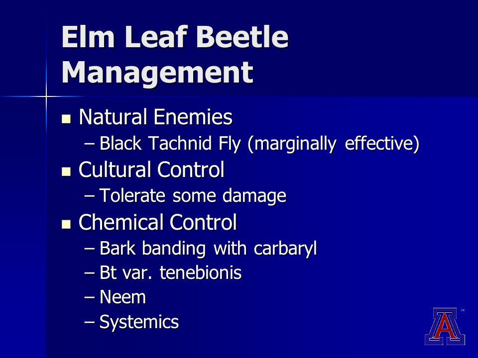 Elm Leaf Beetle Management Natural Enemies Natural Enemies –Black Tachnid Fly (marginally effective) Cultural Control Cultural Control –Tolerate some damage Chemical Control Chemical Control –Bark banding with carbaryl –Bt var.