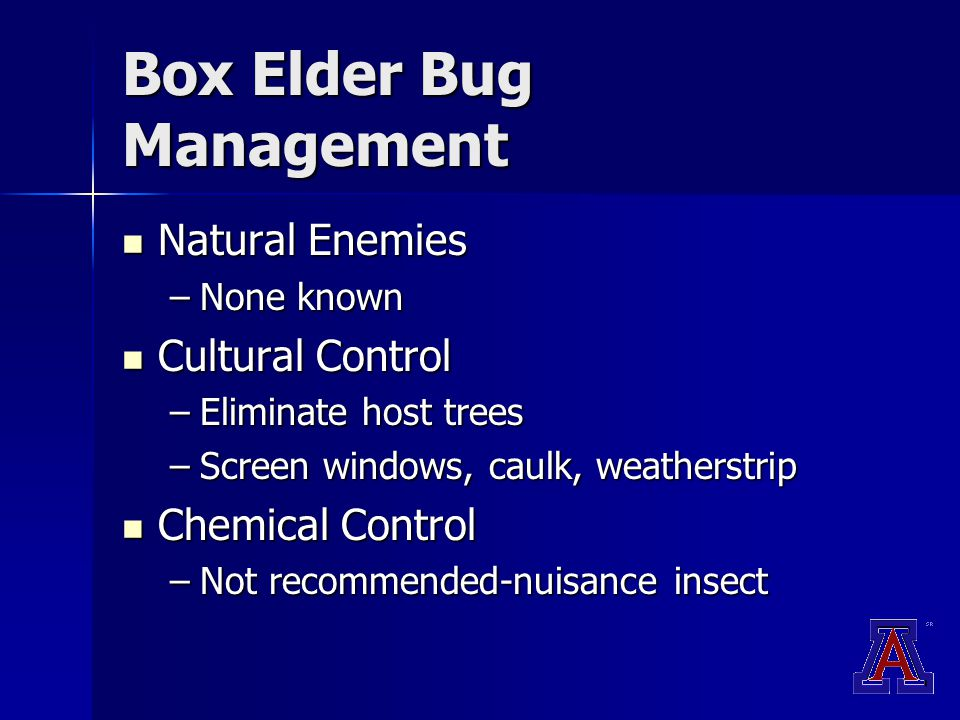 Box Elder Bug Management Natural Enemies Natural Enemies –None known Cultural Control Cultural Control –Eliminate host trees –Screen windows, caulk, weatherstrip Chemical Control Chemical Control –Not recommended-nuisance insect