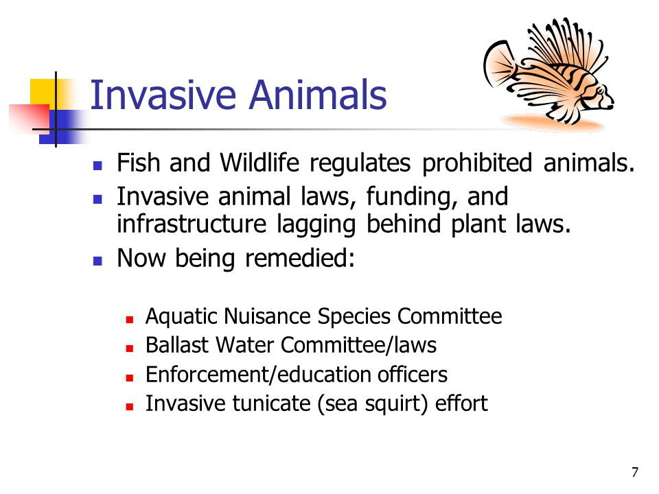 7 Invasive Animals Fish and Wildlife regulates prohibited animals. Invasive animal laws, funding, and infrastructure lagging behind plant laws. Now be