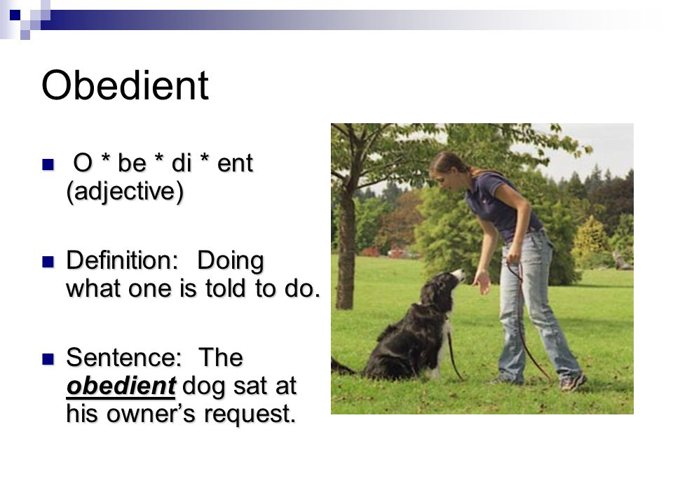 Obedient O * be * di * ent (adjective) O * be * di * ent (adjective) Definition: Doing what one is told to do.