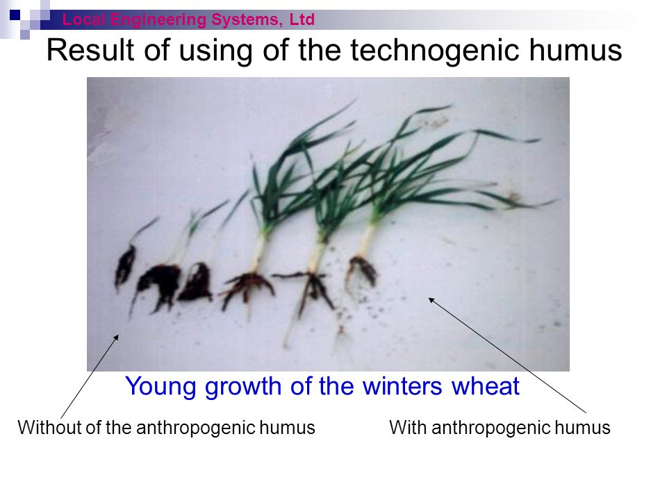 Result of using of the technogenic humus Young growth of the winters wheat Local Engineering Systems, Ltd Without of the anthropogenic humusWith anthr