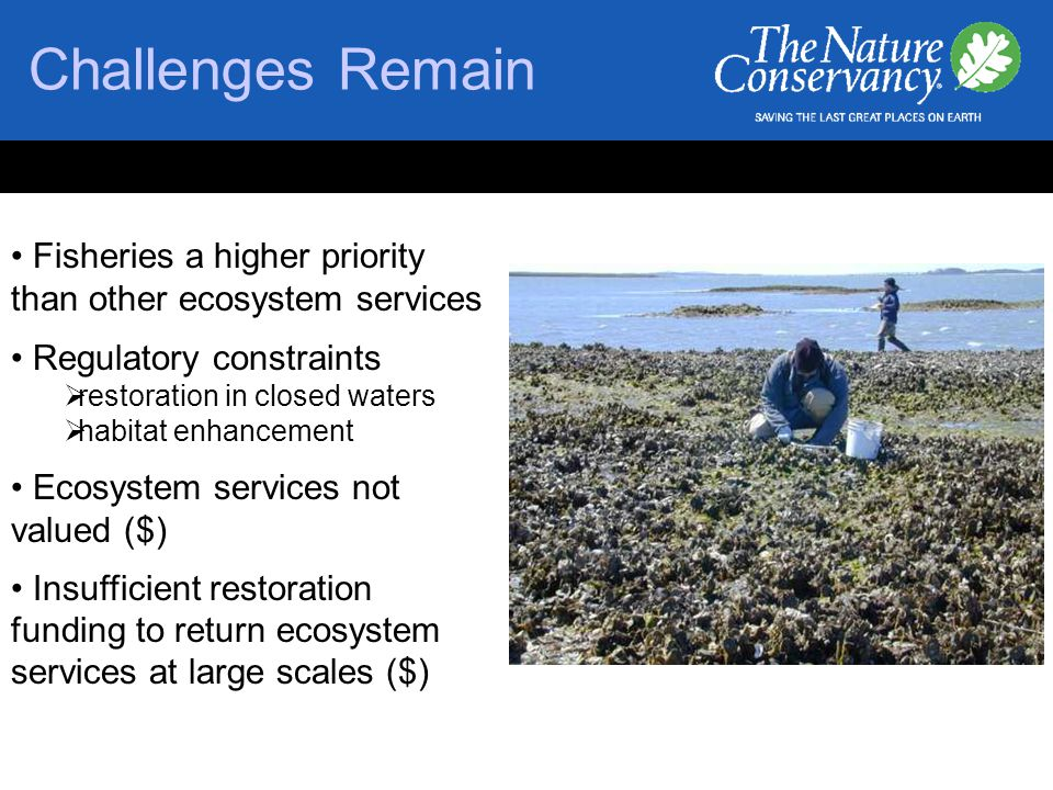 Challenges Remain Fisheries a higher priority than other ecosystem services Regulatory constraints  restoration in closed waters  habitat enhancement Ecosystem services not valued ($) Insufficient restoration funding to return ecosystem services at large scales ($)