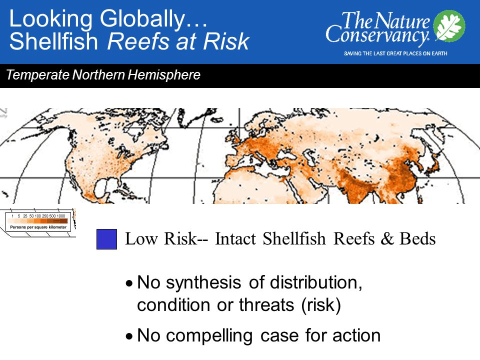 Low Risk-- Intact Shellfish Reefs & Beds  No synthesis of distribution, condition or threats (risk)  No compelling case for action Temperate Norther