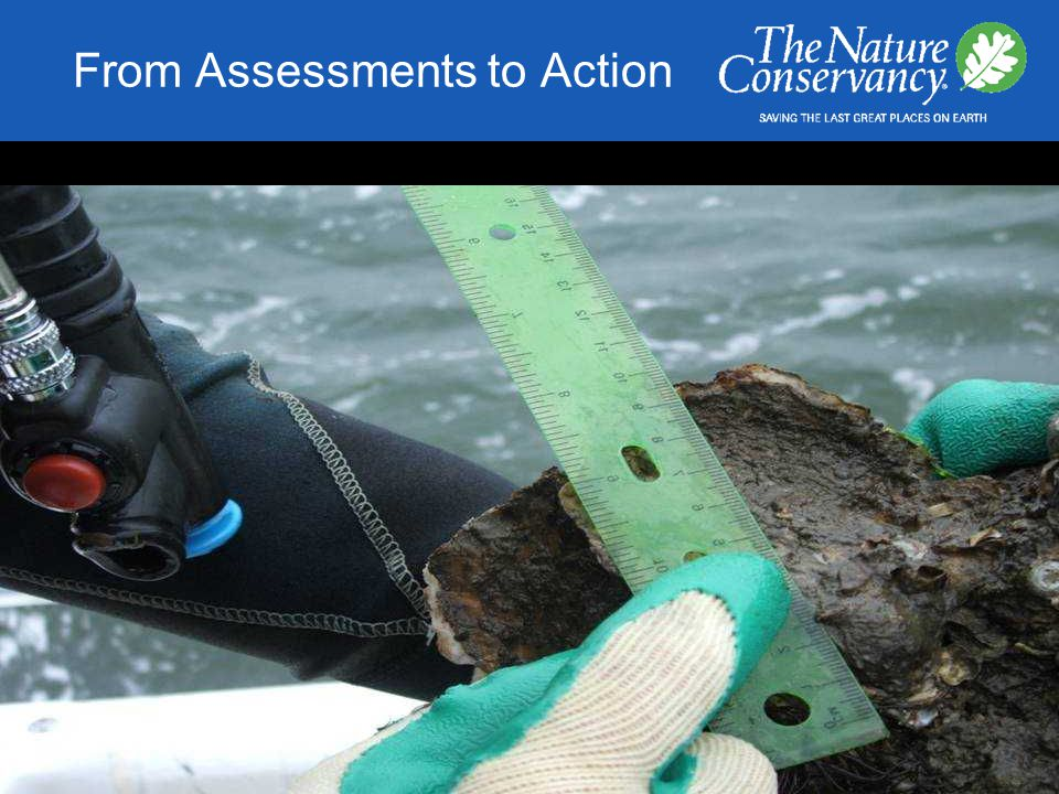 From Assessments to Action Graphic provided by NC Division of Marine Fisheries 2 – 3 m 2 m Sanctuary reefs in NC: Class B rip-rap Limestone marl 150 – 300 tons per reef 5 – 1 0 m